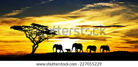 elegant parade in search of sunrise - stock photo
