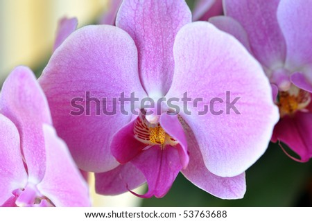 Elegant picture of a purple orchid in blossom perfect for a tranquil background or zen like concept. - stock photo