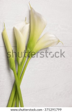 Elegant spring flower, calla lily on rustic wooden table. For wedding background image. Top view with copy space - stock photo