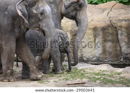 elephan - stock photo