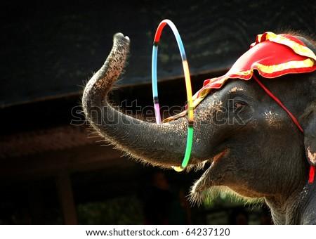 elephant act - stock photo