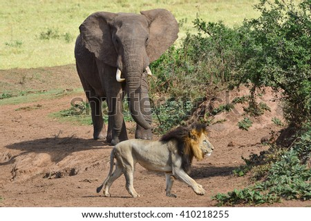 Elephant and a lion  - stock photo