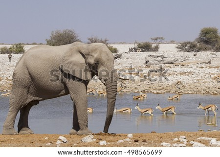 elephant and antelopes drinking in a waterhole in etosha park, namibia