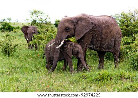 Elephant and youngster - stock photo
