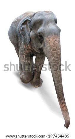 Elephant Asia on a white background - stock photo