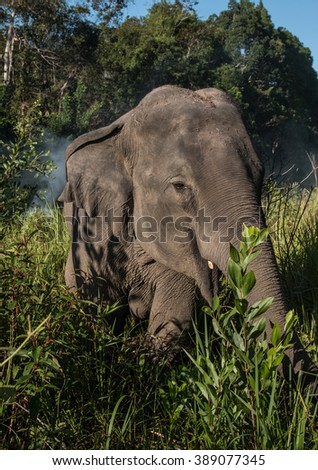 elephant asian animal head strong nature animal