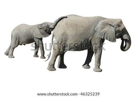 Elephant  Baby and Mother Isolated on White Background with Clipping Path - stock photo