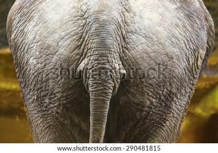 elephant back - stock photo