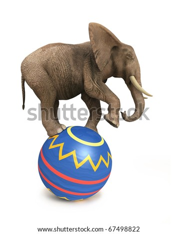 elephant balance on ball
