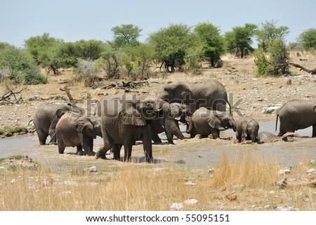 Elephant bath - stock photo