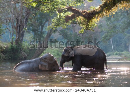 Elephant Bathing - stock photo