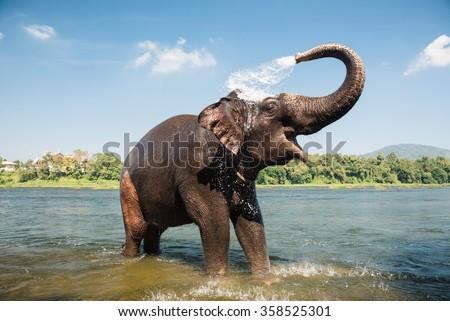Elephant bathing on southern banks of the periyar river at Kodanad training center, Kerala, India - stock photo