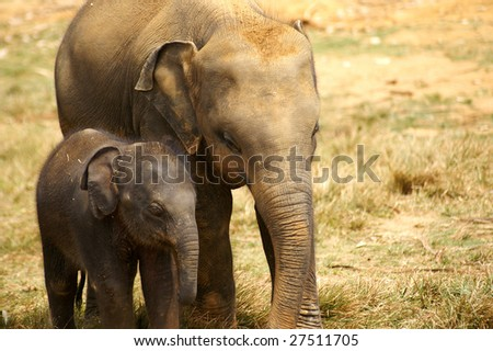 Elephant calf - stock photo