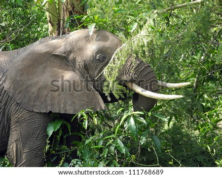 Elephant close up in the jungle - stock photo