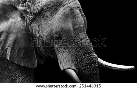 Elephant Close Up Low Key - stock photo