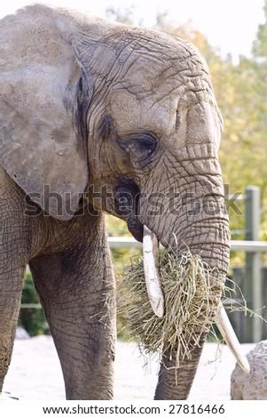 Elephant close up shots - stock photo