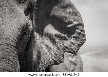 Elephant closeup - stock photo