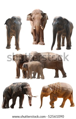 elephant collection - stock photo
