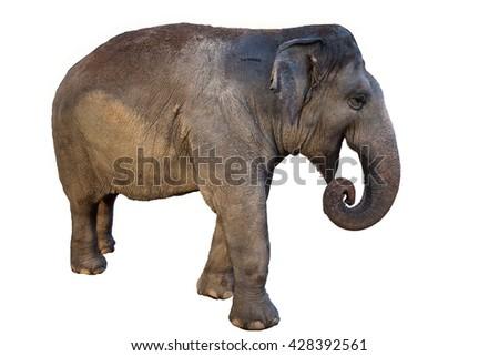 elephant cute - stock photo
