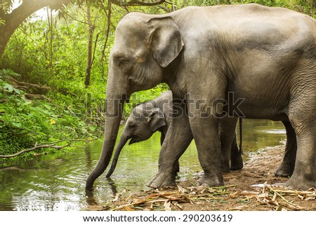 Elephant drinking water. - stock photo