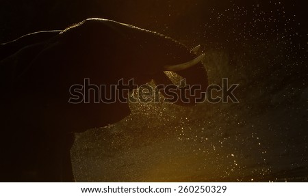 Elephant drinking water early in the morning - stock photo