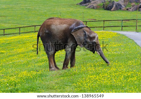 elephant eating in Cabarceno, Spain - stock photo