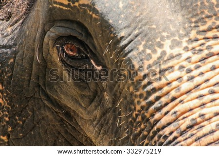 Elephant eye - stock photo