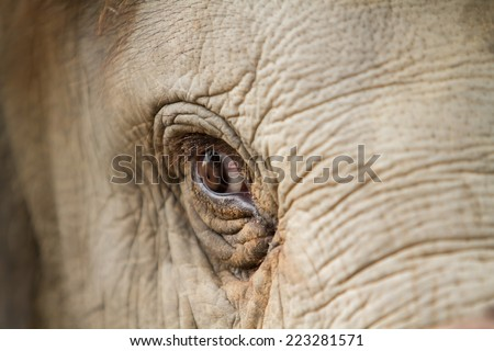 Elephant eye detail - stock photo