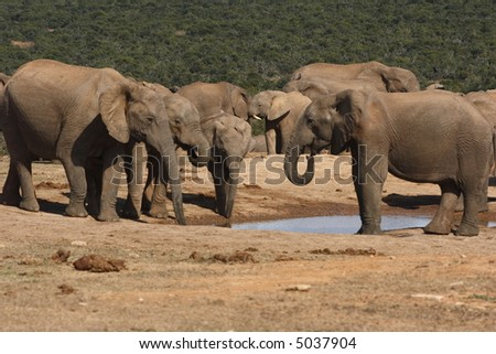Elephant families  gathering at a waterhole