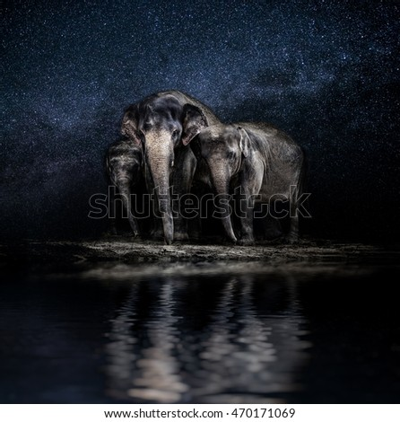 Elephant family among the stars