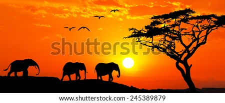 elephant family backlit - stock photo