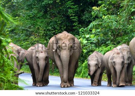 Elephant Family in Khao Yai National Park Thailand.