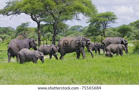 Elephant family in Tarangire National Park, Tanzania - stock photo
