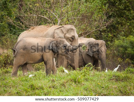 elephant family in Thailand. nature in wildlife