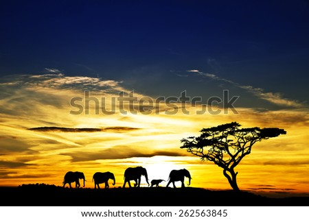 elephant family in the mountains - stock photo