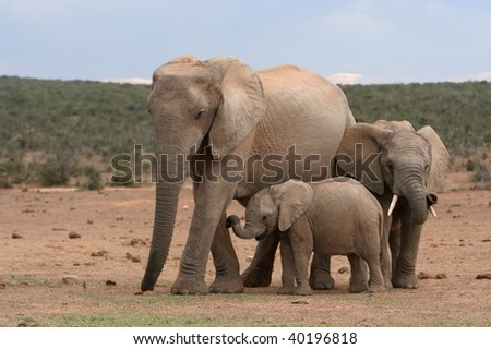 Elephant family standing together in the wild with a small baby