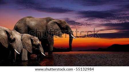 Elephant fantasy - stock photo