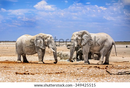Elephant giants on the dry dusty plains of Etosha National Park with natural blue sky background