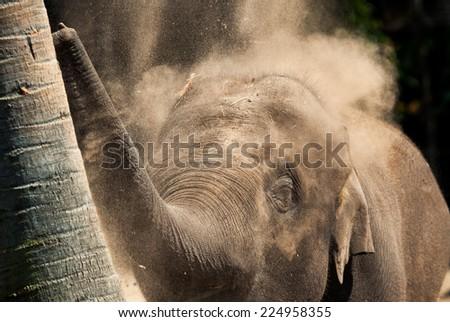 elephant having a dust bath - stock photo