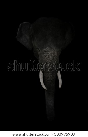 elephant head isolated on black background