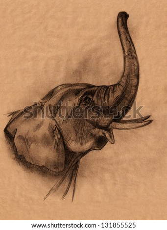 elephant head pencil drawing - realistic sketch in shades of brown - stock photo