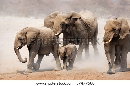 Elephant herd approaching over dusty plains of Etosha - stock photo