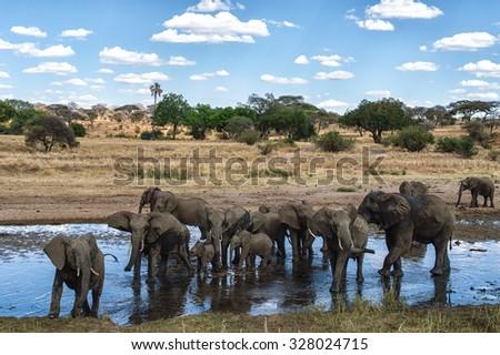 Elephant Herd at a waterhole in the Serengeti nature reserve, Tanzania - stock photo