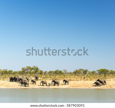 Elephant herd at a watering hole in Botswana, Africa with clear blue sky above - stock photo