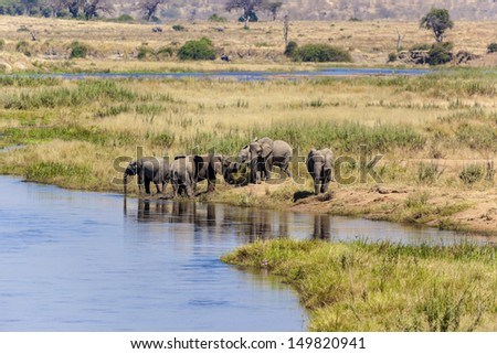 Elephant herd at the water hole - stock photo