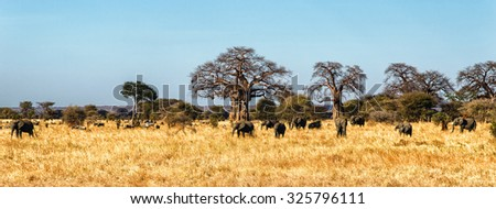 Elephant Herd walking in the Serengeti, Tanzania - stock photo