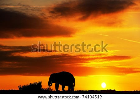 Elephant in Africa - stock photo