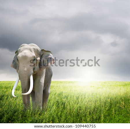 Elephant in green field and rainclouds - stock photo