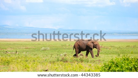 Elephant in Lake Manyara national park, Tanzania