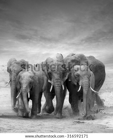 Elephant in lake. National park of Kenya, Africa - stock photo